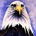 Mountain Bald Eagle by John D Benson