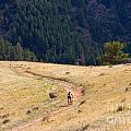 Mountain Biker by Steve Krull