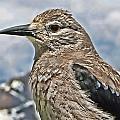 Mountain Bird by David Sanchez