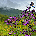 Mountain Butterfly  by Eric Albright