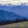 Mountain Color And Snow by Bob Phillips