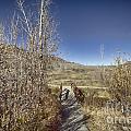 Mountain Creek Bridge by Douglas Barnard