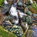 Mountain Creek by Bryan Hildebrandt