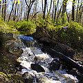 Mountain Creek In Spring by Bill Cannon