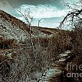 Mountain Creek Path-sundance Utah V3 by Douglas Barnard