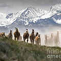 Mountain Dust Storm by Wildlife Fine Art