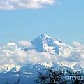 Mountain Fluff by Susan Garren