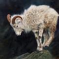 Mountain Goat by David Stribbling