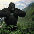 Mountain Gorilla by RicardMN Photography