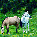 Mountain Horses Grazing  by Lydia Holly