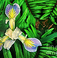 Mountain Iris And Ferns by Dave Welling