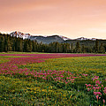 Mountain Meadow Color by Leland D Howard