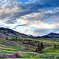 Mountain Meadow by John Lee