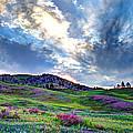 Mountain Meadow Of Flowers by John Lee