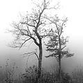 Mountain Mist by Jeff McJunkin