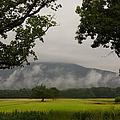 Mountain Mist by Jeffery L Bowers