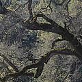 Mountain Oak by Charles Majewski