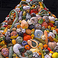 Mountain Of Gourds And Pumpkins by Garry Gay
