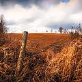 Mountain Pasture by Bob Orsillo