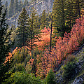 Mountain Side Colors by Colleen McIntier