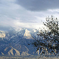 Mountain Snow Storm by Lovina Wright