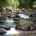 Mountain Stream by Darren Burton