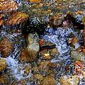 Mountain Stream In Autumn by Eunice Miller