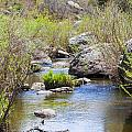Mountain Stream In Castlewood Canyon State Park by Steve Krull