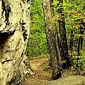 Mountain Trail by Maria Urso