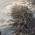 Mountainous Landscape With Beech Trees by John Robert Cozens