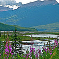 Mountains And Fireweed Along North Sascatchewan River Along Icefield Parkway-ab by Ruth Hager