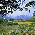 mountains near Yangshou and Guilin  by Rudi Prott