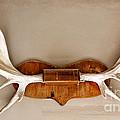 Mounted Elk Antlers by Les Palenik
