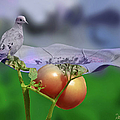 Mourning Dove by Ericamaxine Price
