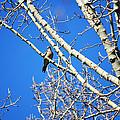 Mourning Dove by Linda Kerkau