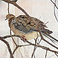Mourning Dove - Sing No Sad Song For Me #2 by Mother Nature