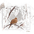 Mourning Doves by Al  Mueller