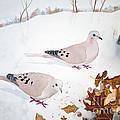 Mourning Doves by Laurel Best