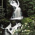 Mouse Creek Falls - Fs000675 by Daniel Dempster