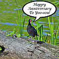 Mouthy Moorhen Anniversary Card by Al Powell Photography USA
