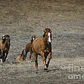 Moving On Out by Wildlife Fine Art
