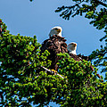Mr. And Mrs Eagle by Sabine Edrissi