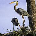 Mr. And Mrs. Heron by Fran Gallogly