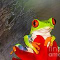 Mr. Curious by Mary Lou Chmura