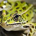 Mr. Froggy by Josh Clifford