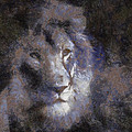 Mr Lion Photo Art 02 by Thomas Woolworth