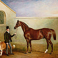 Mr Meakin Holding Sir Robert Peels Chestnut Hunter With His Dogs Hector And Jem by John E Ferneley