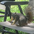 Mr. Squirrel Relaxing
