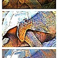 Mr. Tortoise Vertical Triptych by Alice Gipson