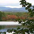 Mt Chocorua Through The Trees by Denyse Duhaime